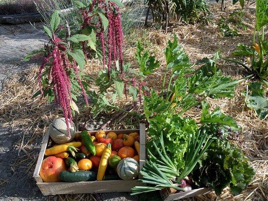 Légumes & aromates